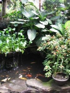 Balinese pond