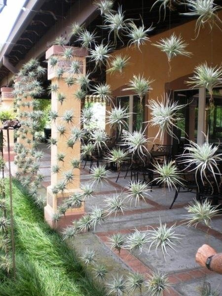 novelty hanging plants